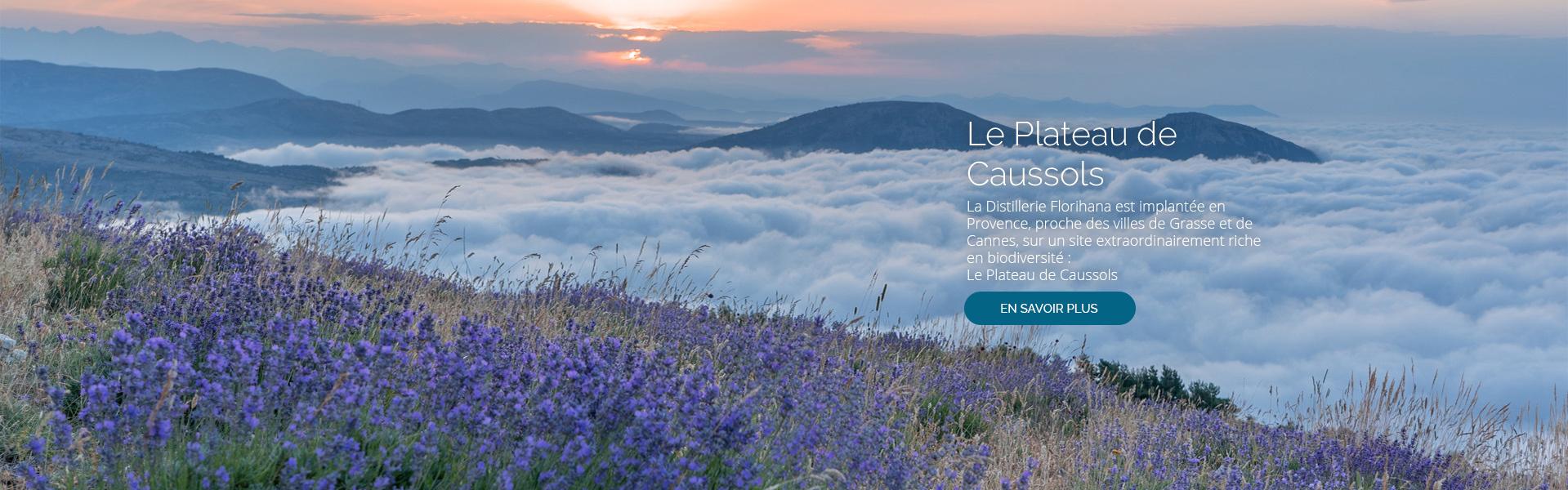 La Distillerie Florihana est implantée en Provence, proche des villes de Grasse et de Cannes, sur un site extraordinairement riche en biodiversité : Le Plateau de Caussols.